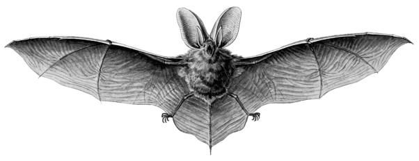 bat-transparent-1100